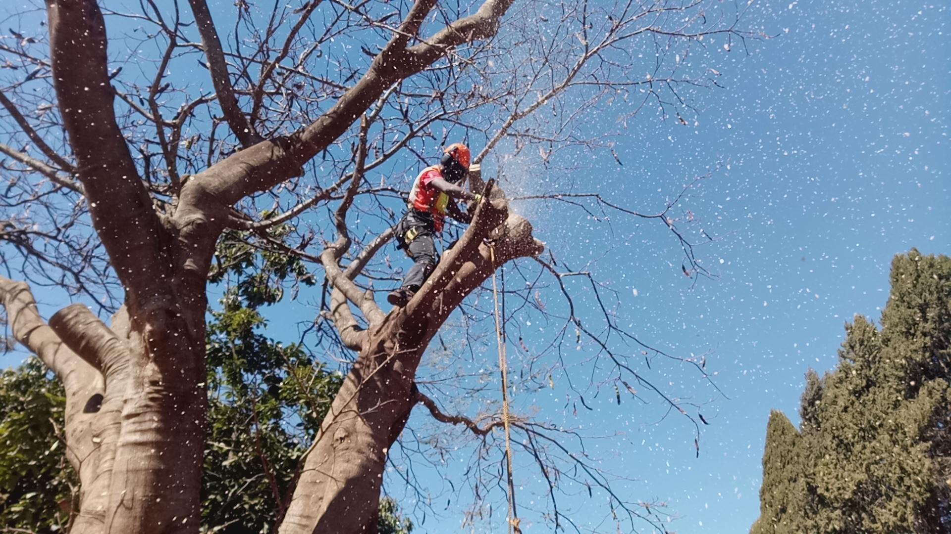 tree felling harare