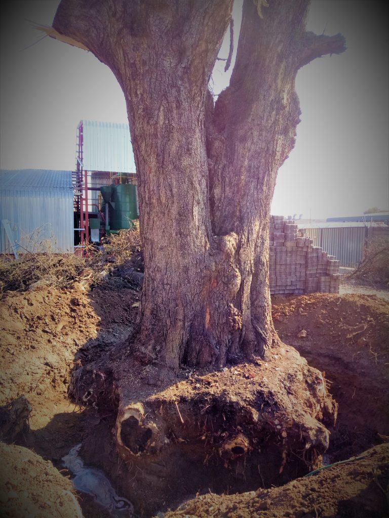 stump removal harare
